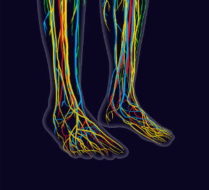 Nerves play an integral role in foot health!